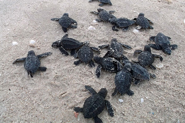 Marine Turtle Report 2016-17